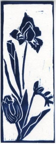 Iris (blue)
